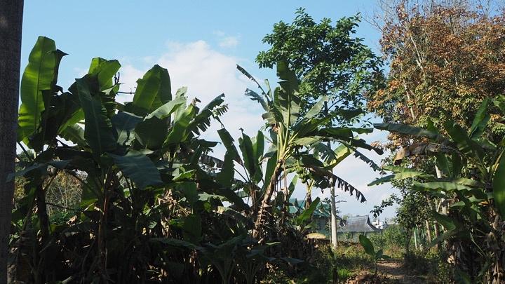 """""""天很蓝树很绿,人不是很多,商业气息不浓厚,是个散心闲逛的好地方热带雨林风光特别坑_西双版纳傣族园""""的评论图片"""