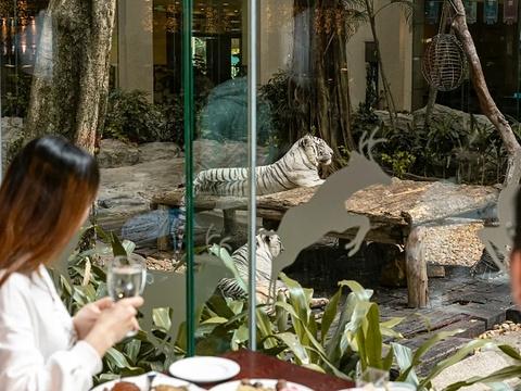 白虎自助餐厅旅游景点攻略图