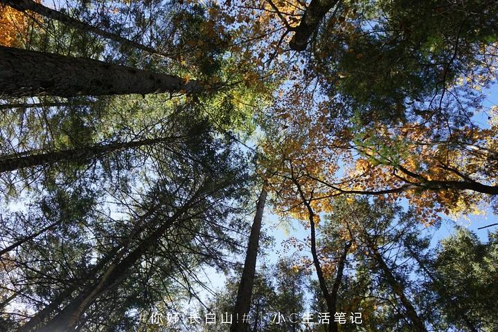 """""""当你走到大概尽头的时候,面前的悬崖,直直往下望,人迹未至的地方才是地下森林_谷底林海""""的评论图片"""