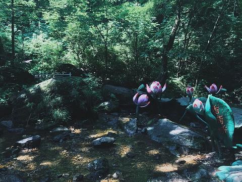 香炉山的图片