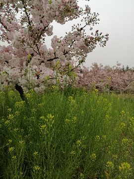 樱花山风景区旅游景点攻略图