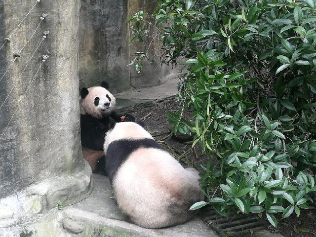 """""""空气真的是超级好,负离子天然氧吧,还能看到野放的小熊猫_熊猫谷""""的评论图片"""