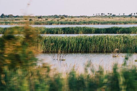 黄河入海口旅游景点攻略图
