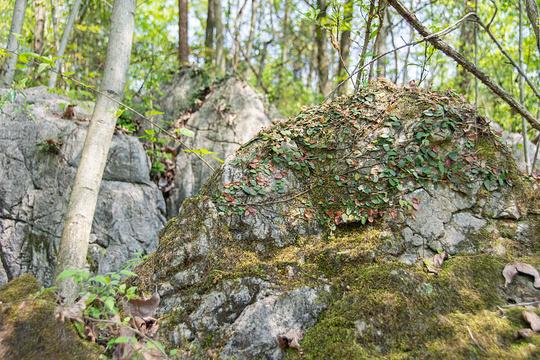 宜都市奥陶纪石林景区旅游景点图片