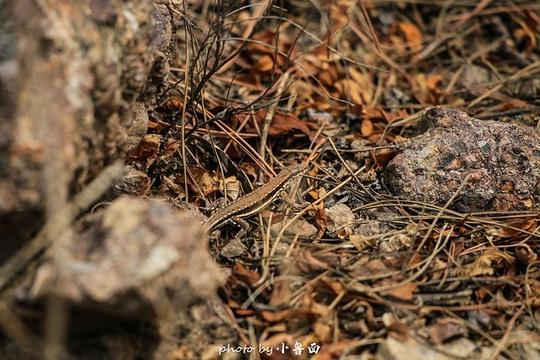 磬锤峰国家森林公园旅游景点图片