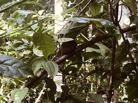眼镜猴游客中心旅游景点图片