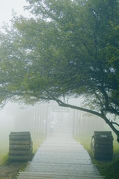 仙女山风景区的图片