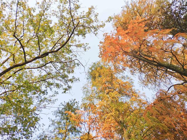 """""""每走几步,都能看到不同颜色的植物,红的,黄的,目之所及,皆是美景。路对面是林林总总的美食店铺_湖南大学""""的评论图片"""