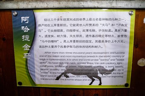 昭苏天马文化园