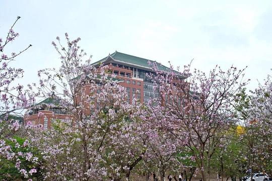 华南农业大学旅游景点图片
