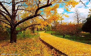 【11月出行】10个最适合现在出发的旅行地,带你看遍最应季的景色~