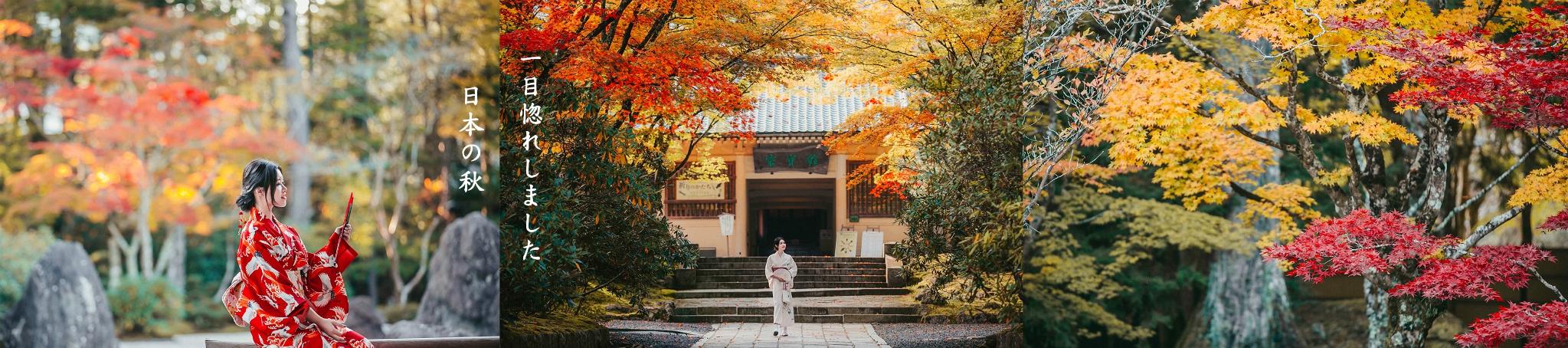 探访日本世遗,秋日红叶狩×圣地修行之旅