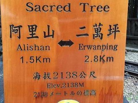 巨木群栈道旅游景点图片