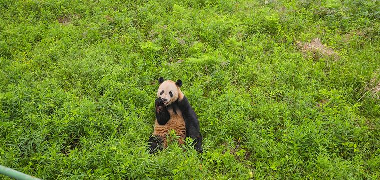 下渚湖熊猫园旅游景点图片