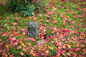 『 京都 』深秋赏枫之旅全攻略,与你共度红叶季的浪漫色彩
