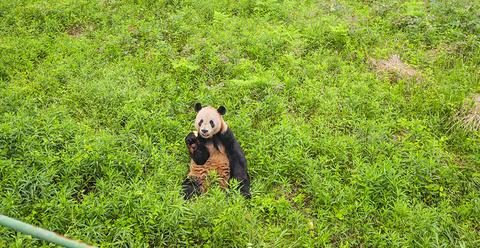 下渚湖熊猫园旅游景点攻略图