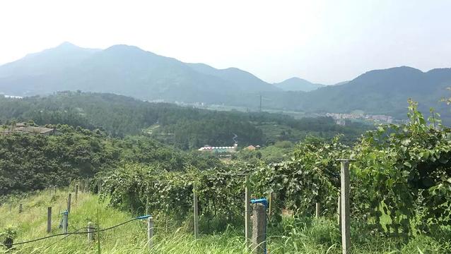 香蜜山生态果庄旅游景点图片
