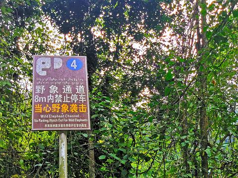 野象谷旅游景点攻略图