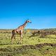 长颈鹿中心
