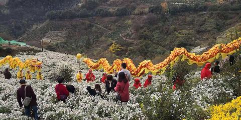 金竹岭村旅游景点攻略图