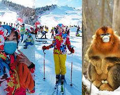 冰雪神农架,不仅有美丽金丝猴,还有超棒的滑雪胜地