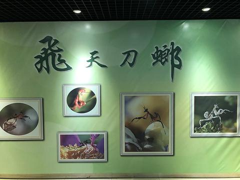 上海昆虫博物馆旅游景点攻略图