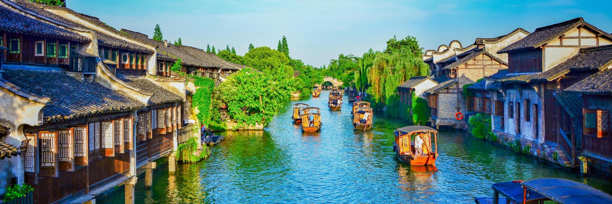 乌镇旅游 樱花树下惬享江南水乡的慢时光