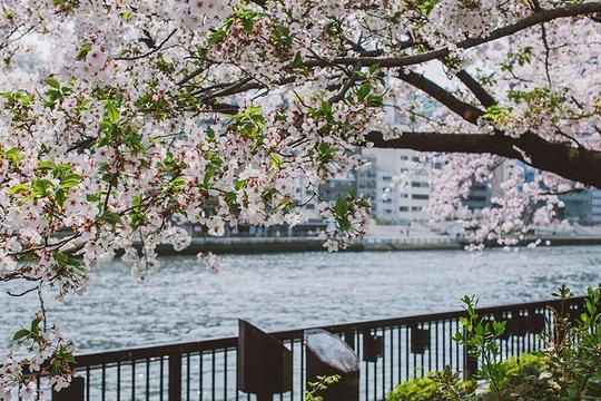 大阪造币局旅游景点图片