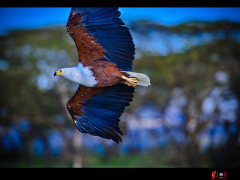 奈瓦沙湖旅游景点图片