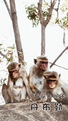 """Tips:石窟属于佛教圣地,因此需要光脚游览。丹布勒著名的皇家岩石寺是 斯里兰卡 的标志_丹布勒石窟""的评论图片"