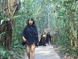西双版纳热带雨林谷