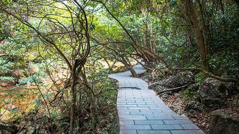 石上森林旅游景点攻略图