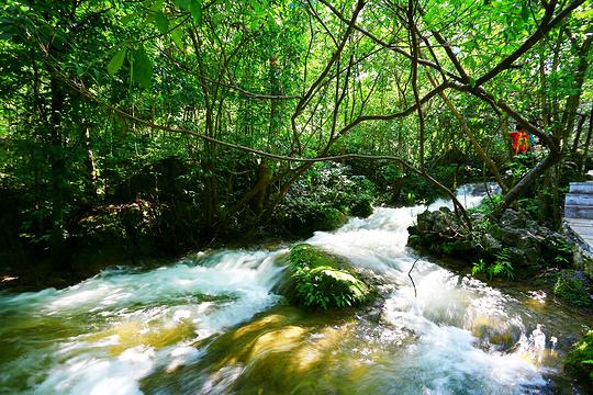 水上森林上段旅游景点图片