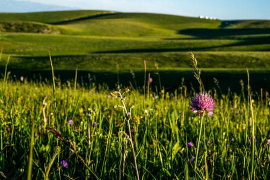 喀拉峻牧业村旅游景点图片