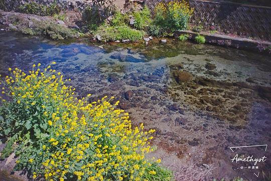 水前寺成趣园旅游景点图片