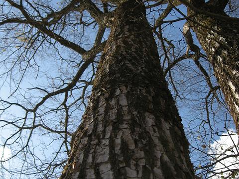 金龙山国家森林公园旅游景点图片