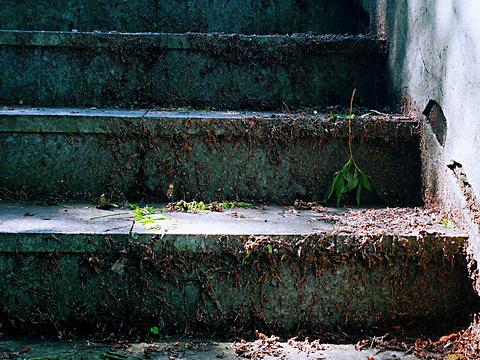兴安森林公园旅游景点图片