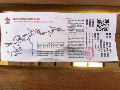 额济纳神树旅游景点图片