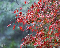 走进森林,走进时光,走进浙江的诗画山水