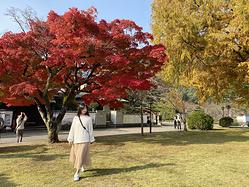 日本小众目的地-山口县3晚4天追枫之旅