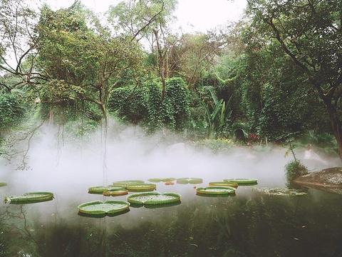 汇友户外·穿越万石植物园旅游景点图片