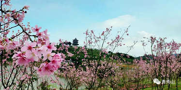 南宁青秀山桃花艺术节