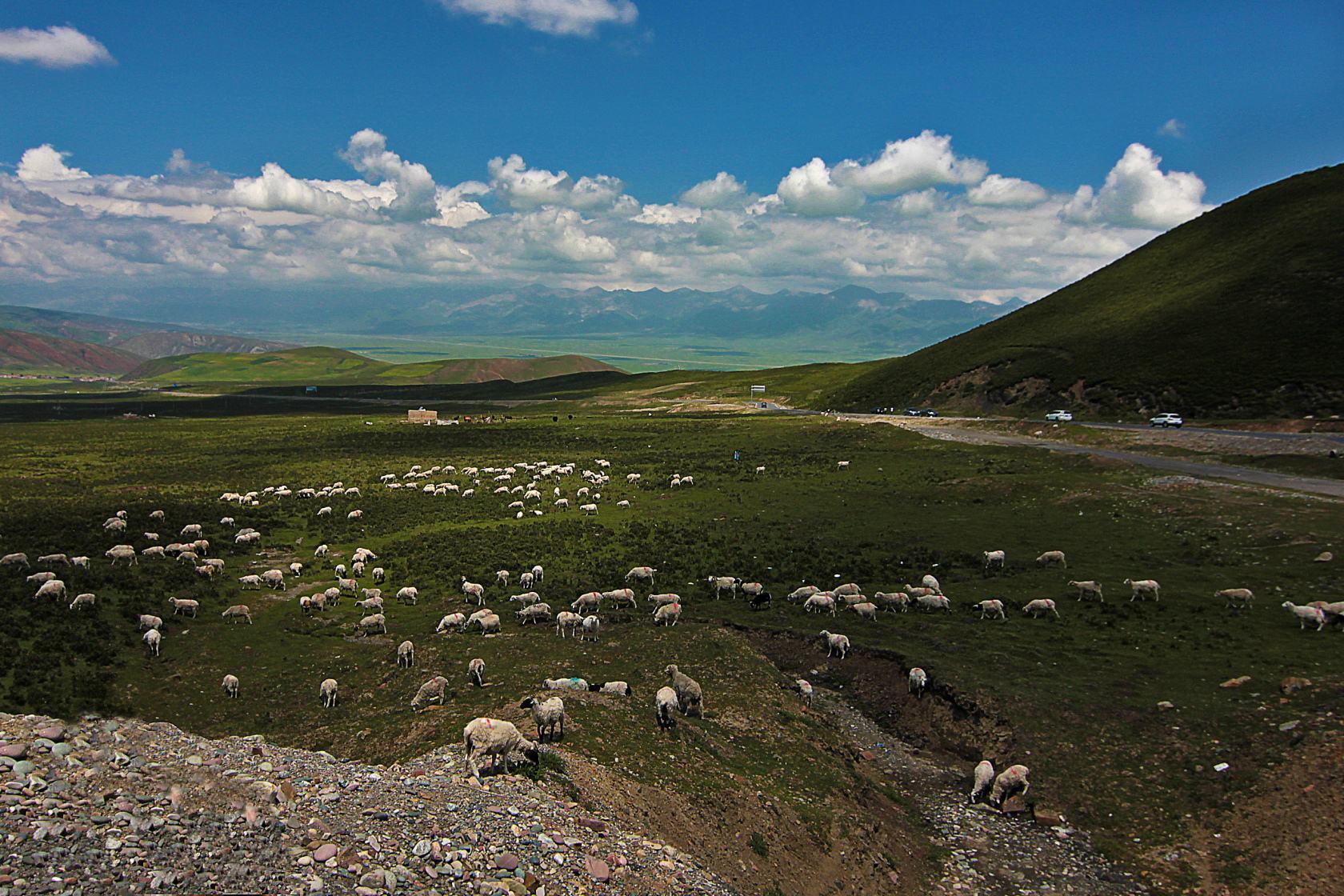 南疆的3D环绕游 | 喀什牛羊大巴扎