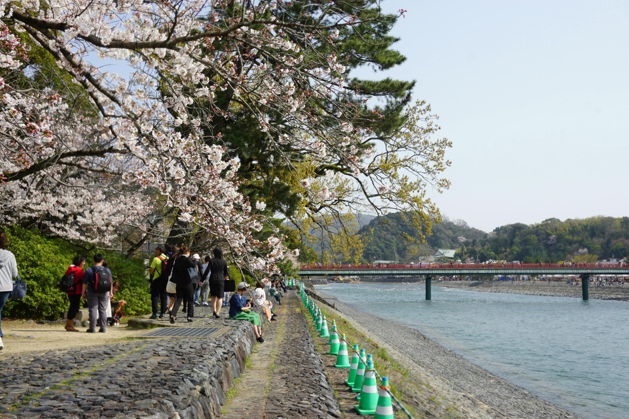 霓虹国9天赏樱之旅——好玩好吃走断腿(京都、大阪、奈良、有马)