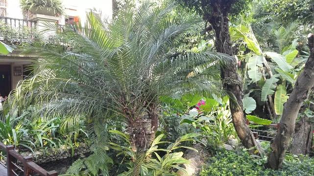 呀诺达雨林食府旅游景点图片