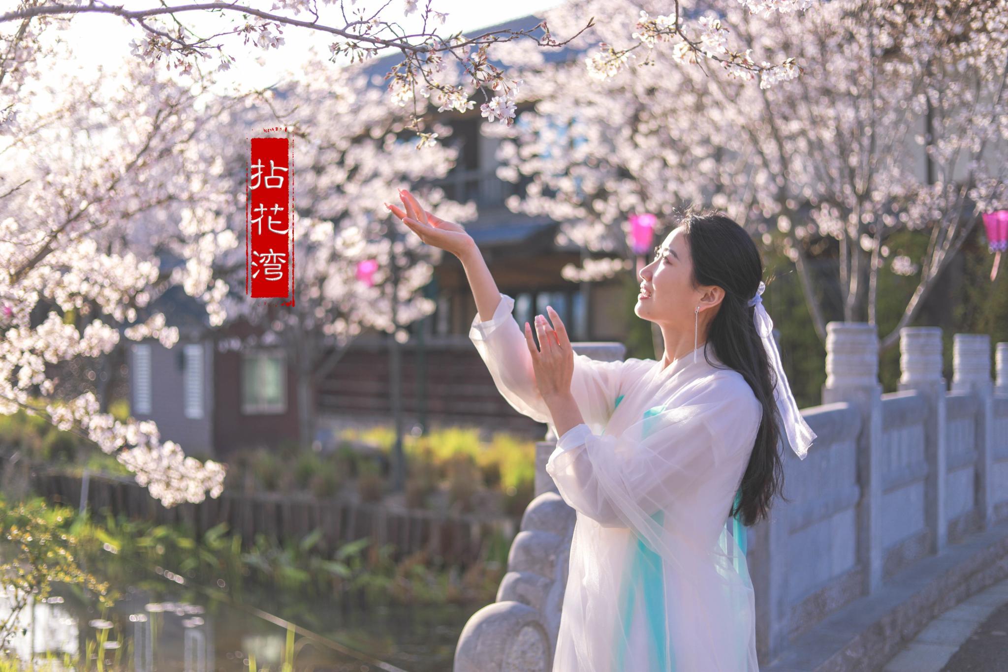 烟花三月的无锡滨湖,樱花烂漫,赴一场春天的约会