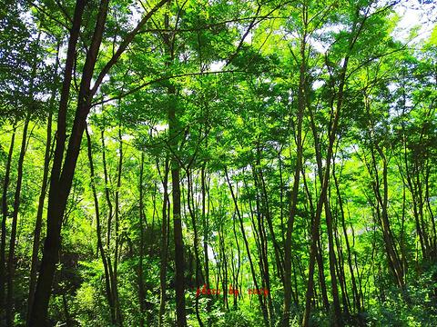 麦积山植物园旅游景点图片