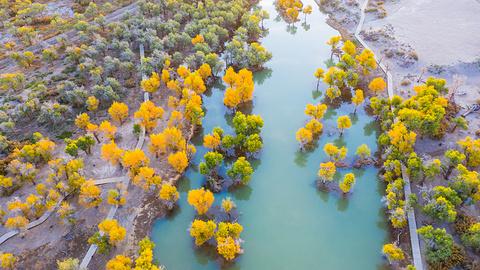 大漠胡杨旅游区的图片