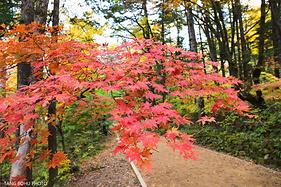 层林尽染寻觅韩国最美秋天,邂逅浪漫江原道的诗情画意。