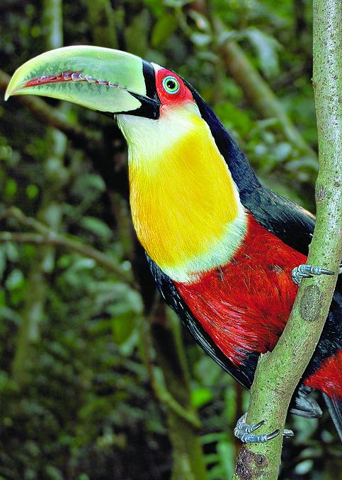 伊瓜苏鸟园 Iguassu Birds Park图片